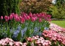 Strona główna :: wiosenne kwiaty