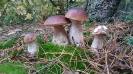 jesien w lesie