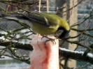 ptaki zimą